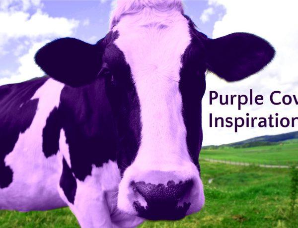 Purple Cow Inspiration