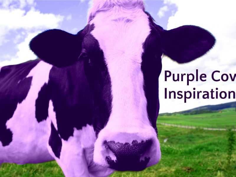 Purple Cow Inspiration